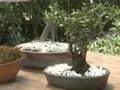 Creación de un bonsai