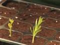 Multiplicar plantas por esquejes