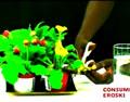 Combatir plagas en plantas de interior.